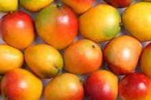 Farm Fresh Sweet Mango for sale/ fresh mango for export