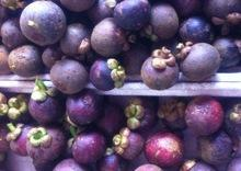 Fresh Mangosteen fruits for sales
