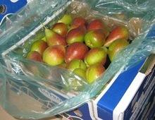 Forelle (Vermont Beauty) Pears/ Fresh Pear For Sale