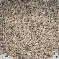 Best Quality Cotton Seed Meal for sale