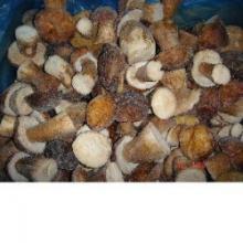 Wild Mushroom Frozen Boletus Luteus