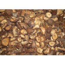 Dried Shiitake  Mushroom   Boletus