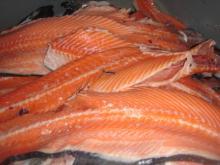 Salmon Backbone