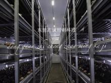 Chinese LED Mushroom grow lights|mushroom projects|lighting solutions|Mushroom equipment