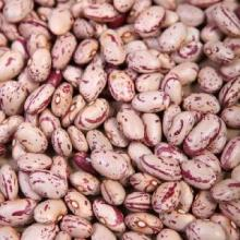 New Crop Purple Speckled Kidney Beans