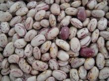 Sugar Beans | Kidney Beans | Mung Beans