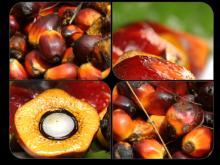 Palm Oil (Refined / Crude)