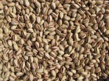Bulk Pistachio Nuts