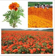 Marigold extract of Lutein Ester
