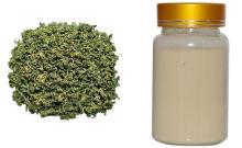 Gynostemma   Extract