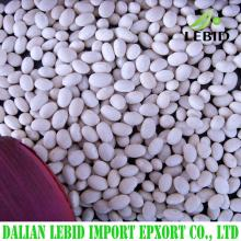 2016 Crop small size white beans Navy bean for sale