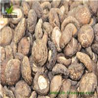Fresh Shiitake From Northeast Of China
