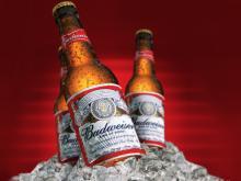 Budweiser Beer Fresh Stock