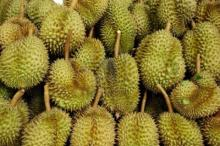 Fresh Durian Monthong from Thailand