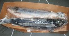 Frozen Atlantic Salmon
