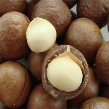 Macadamia Nuts - Raw or Kernels - Small & Large Orders