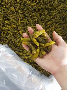 PICKLED CUCUMBER GHERKINS CORNICHON Russian Berlinskye European taste (AMY 84 1683 655 628)