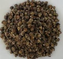 Moringa organic seeds