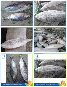 Sea Food WR Tilapia Black Tilapia Fish