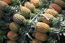 ORGANIC FRESH PINEAPPLES FRUITS/PINEAPPLE FRUIT/PINEAPPLE