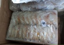 Sea white shrimp