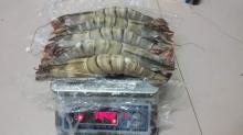 Fresh white shrimp/prawn