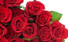 Export fresh cut rose flowers