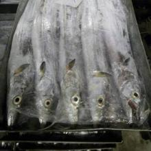 Quality Frozen Ribbon Fish, Seafood, Tilapia Fish