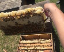 Forest honey wholesale