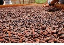 Cocoa and Coffee beans for sale