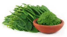 Bulk Supply Organic Moringa Tea