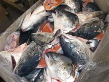 Frozen Atlantic Norwegian Salmon Heads