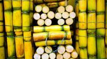 HIGH QUALITY FRESH SUGAR CANE