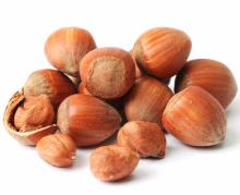 whole sale organic Hazel nuts