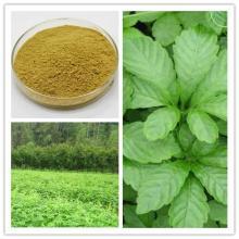 Gynostemma   Extract   Gypenoside s