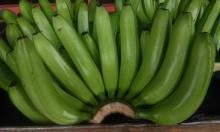 Best quality Fresh Green Indian Banana