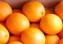 Fresh Orange Navel