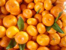 Best Fresh Fruits Mandarin Orange
