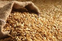 High Quality Barley for Animal Feed