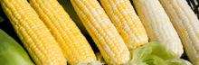 Non GMO White Maize / White Corn