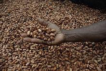 Sun Dried Cocoa beans