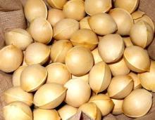 Ginkgo Nuts Wholesale