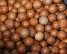 Raw Macadamia Nuts in Shell
