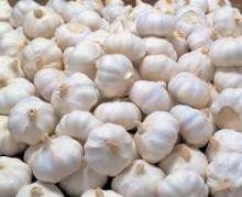 fresh white garlic