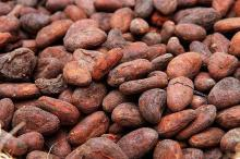 Cacao Beans +Dried Criollo Cocoa Beans +Dried Fermented Cacao +Dried Raw Cocoa Beans +Organicc
