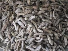 Dried Sea Cucumber - High Quality