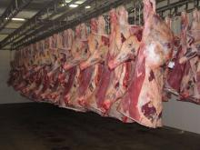 Processed Frozen Beef Meat for sale