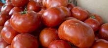 Fresh Tomato, Fresh Onion, Fresh Garlic and