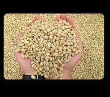 Ethiopian Green Coffee Beans best quality