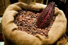 Best chocolate supplier of chocolate beans